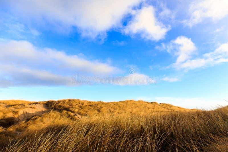 Αμμόλοφοι στην παραλία Hvide Sande στοκ εικόνες με δικαίωμα ελεύθερης χρήσης