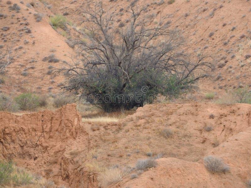 Αμμόλοφοι στη Σαχάρα, merzouga Μαρόκο Χρυσοί αμμόλοφοι ερήμων Λόφοι της Σαχάρας Να εξισώσει στην έρημο Lanscape Μαρόκο Φυσικός στοκ φωτογραφία με δικαίωμα ελεύθερης χρήσης