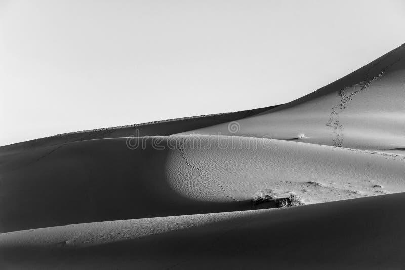 Αμμόλοφος άμμου στην έρημο σε γραπτό στοκ εικόνα με δικαίωμα ελεύθερης χρήσης