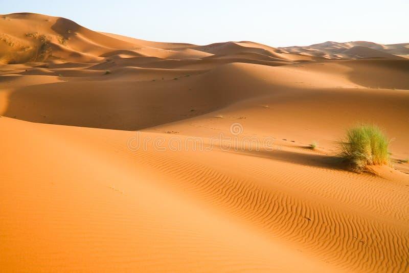 αμμόλοφος Μαροκινός ερήμ&om στοκ φωτογραφία