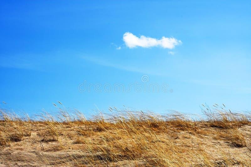 αμμόλοφος στοκ εικόνα
