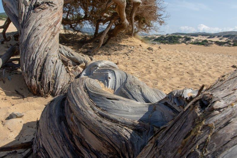 Αμμόλοφος Piscinas, Σαρδηνία Ιταλία στοκ εικόνες