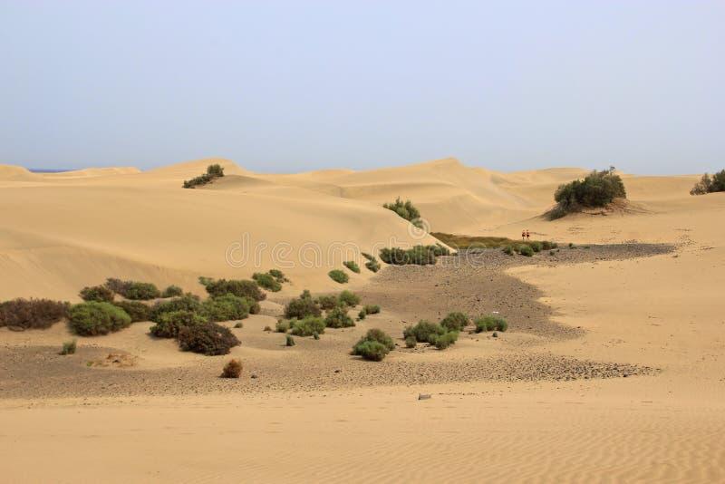 Αμμόλοφοι άμμου ερήμων σε θλγραν θλθαναρηα στοκ φωτογραφία με δικαίωμα ελεύθερης χρήσης