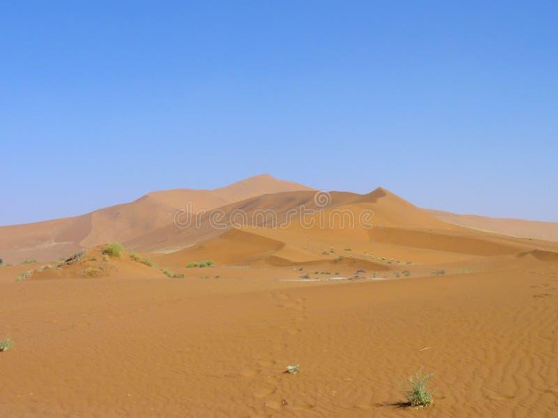 Αμμόλοφοι άμμου ερήμων στοκ φωτογραφία με δικαίωμα ελεύθερης χρήσης