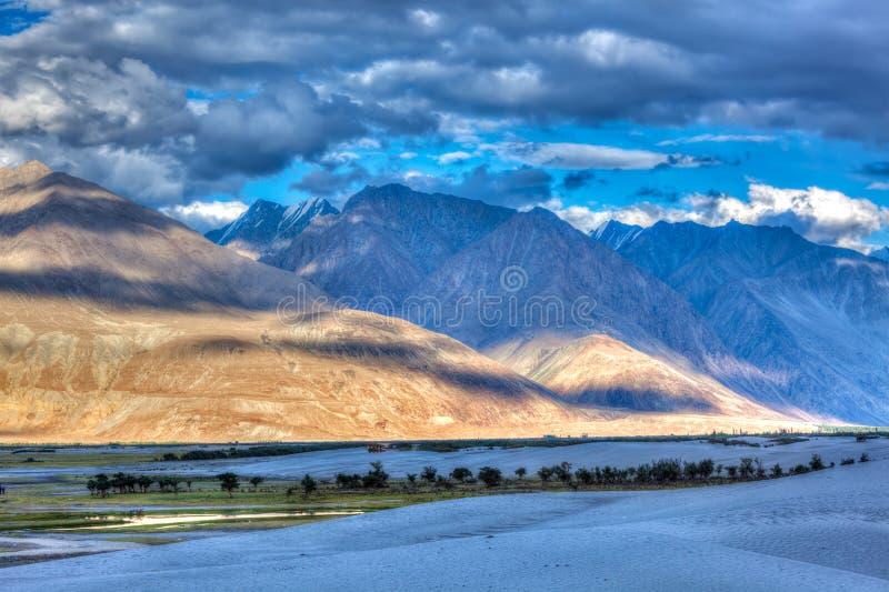Αμμόλοφοι άμμου. Κοιλάδα Nubra, Ladakh, Ινδία στοκ εικόνες