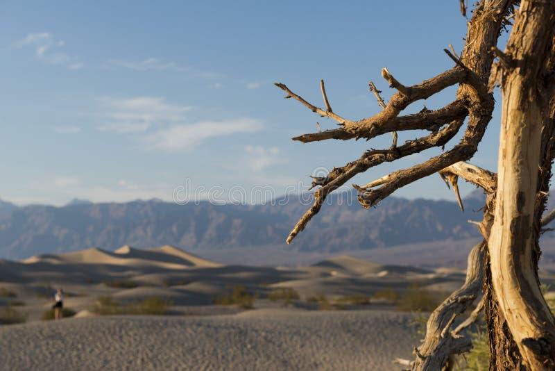 Αμμόλοφοι άμμου κοιλάδων θανάτου στοκ εικόνα με δικαίωμα ελεύθερης χρήσης