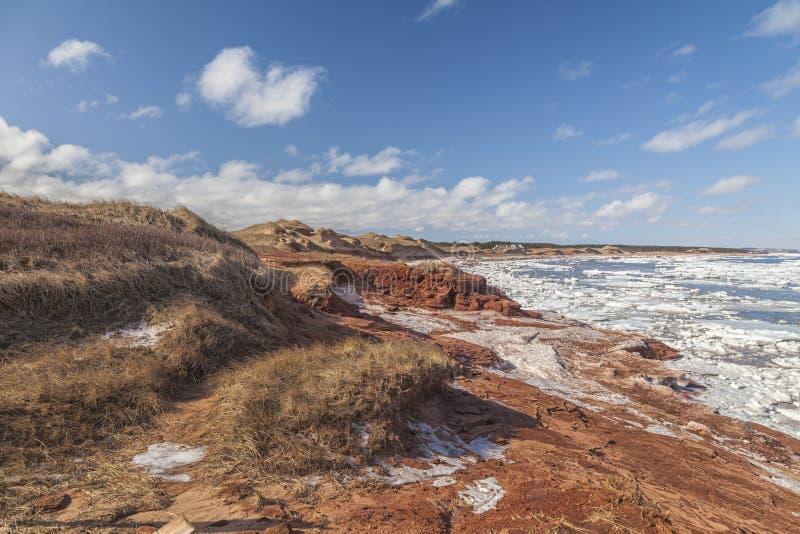 Αμμόλοφοι άμμου Cavendish στοκ εικόνα με δικαίωμα ελεύθερης χρήσης