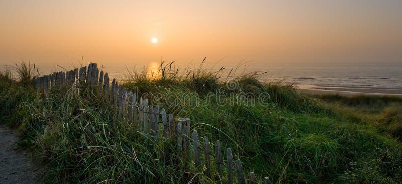 Αμμόλοφοι και η θάλασσα στοκ εικόνες