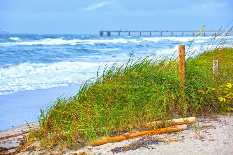 Αμμόλοφοι και κύματα χλόης παραλιών της Φλώριδας κατά τη διάρκεια της θύελλας στοκ φωτογραφίες