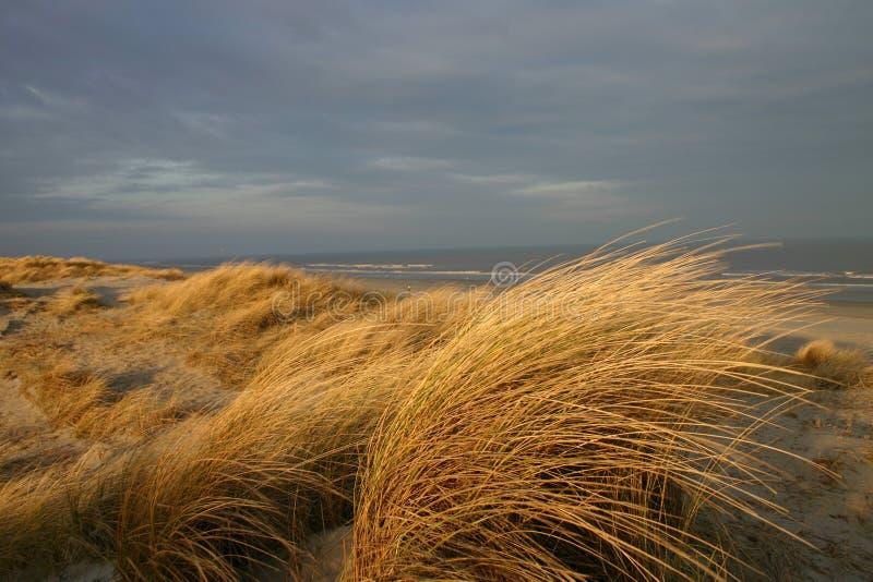 αμμόλοφοι Ολλανδία στοκ εικόνα