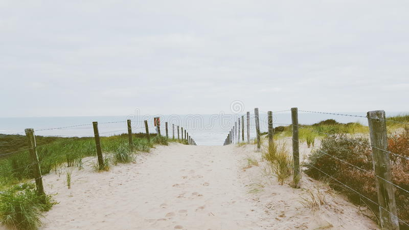 αμμόλοφοι ολλανδικά στοκ φωτογραφία