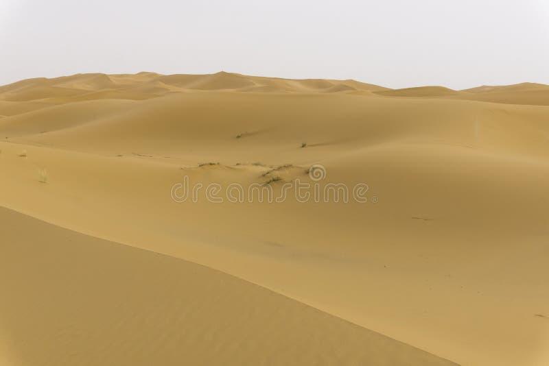 Αμμόλοφοι στην έρημο Σαχάρας στοκ φωτογραφία