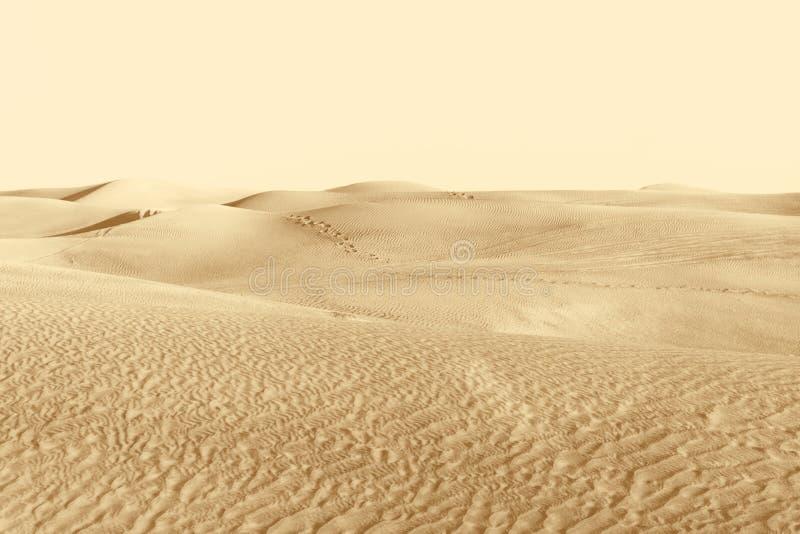 Αμμόλοφοι στην έρημο στοκ εικόνα