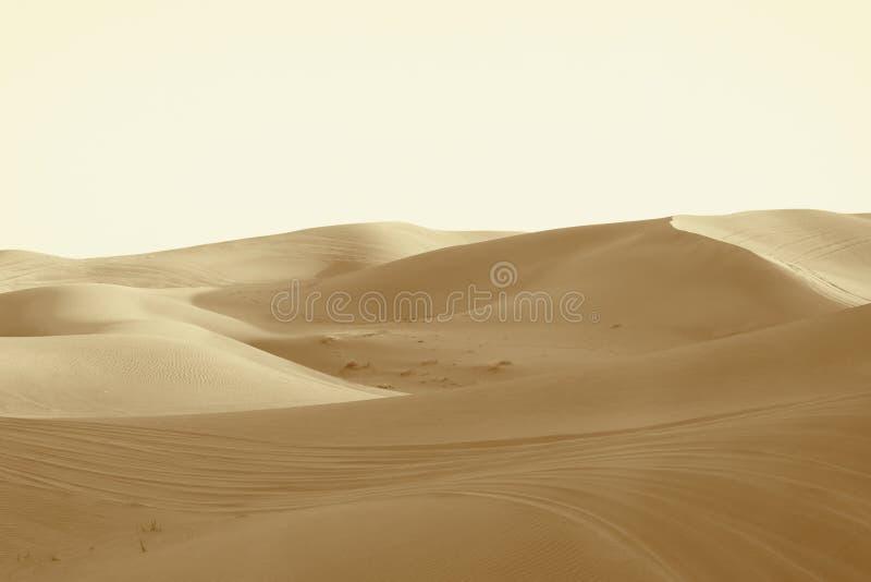 Αμμόλοφοι στην έρημο στοκ φωτογραφία