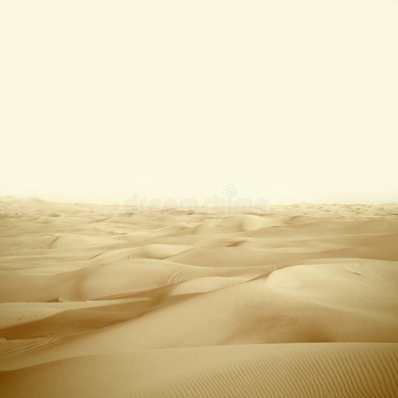 Αμμόλοφοι στην έρημο στοκ φωτογραφίες με δικαίωμα ελεύθερης χρήσης