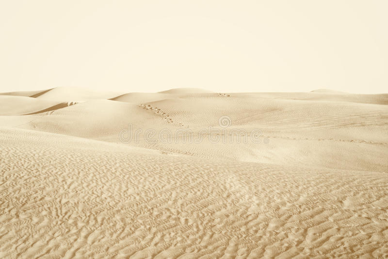 Αμμόλοφοι στην έρημο στοκ εικόνες