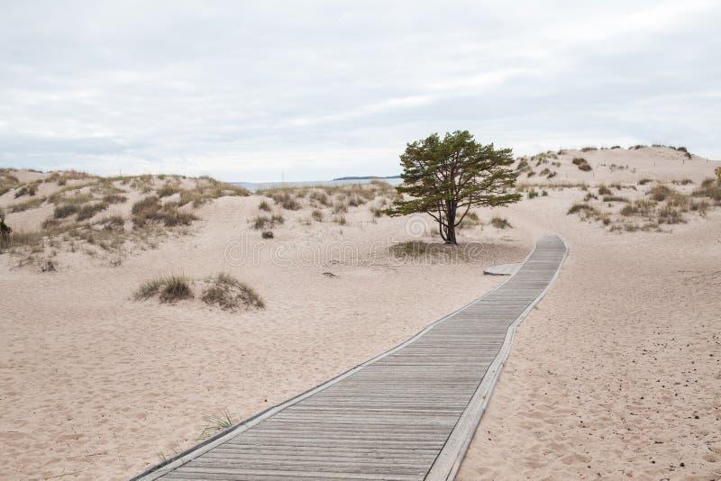 Αμμόλοφοι στην παραλία Yyteri στοκ εικόνες