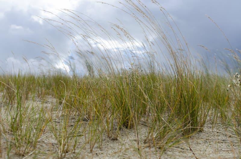 αμμόλοφος στοκ φωτογραφίες