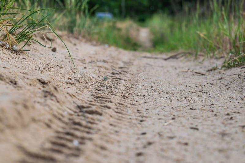 Αμμώδης, μικρή και στενή πορεία στο δάσος που οδηγεί στην πράσινη βλάστηση χλόης στοκ εικόνες με δικαίωμα ελεύθερης χρήσης