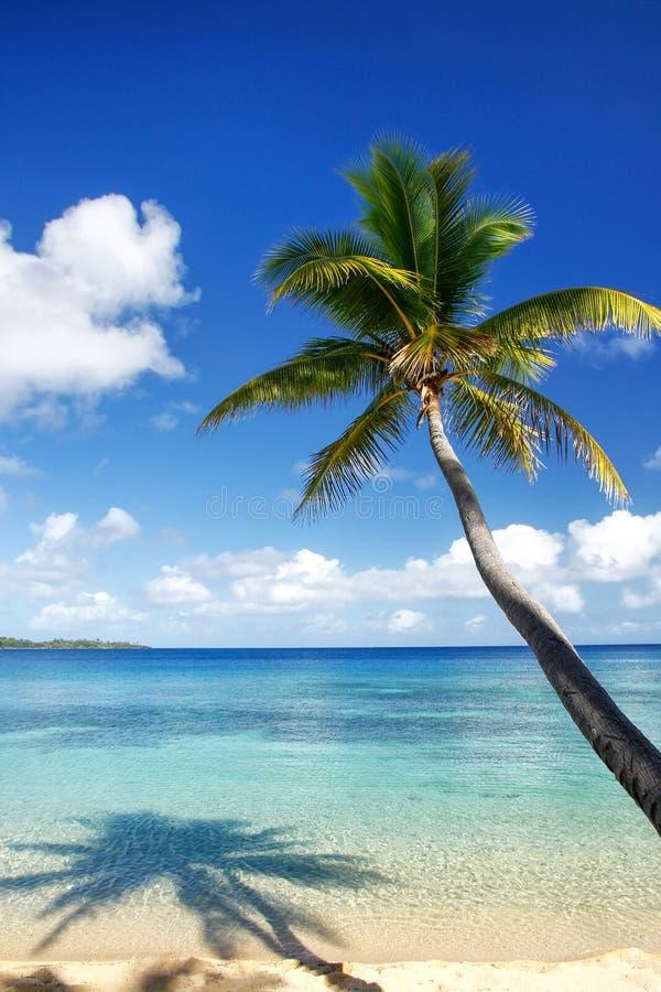 Αμμώδης παραλία και κλίνοντας φοίνικας στο νησί Drawaqa, νησιά Yasawa, Φίτζι στοκ φωτογραφία με δικαίωμα ελεύθερης χρήσης