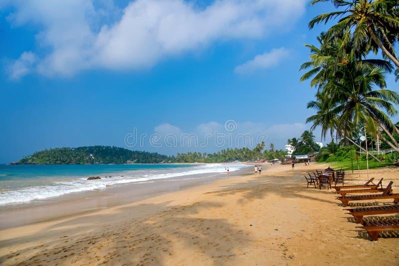 Αμμώδης παραλία με τα deckchairs κάτω από τα δέντρα καρύδων στοκ εικόνες