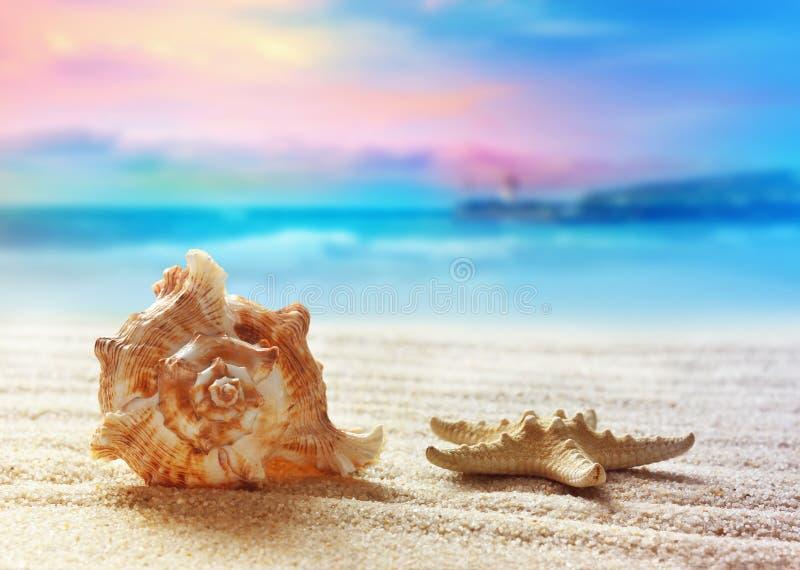 αμμώδεις διακοπές κοχυλιών θάλασσας έννοιας παραλιών στοκ φωτογραφίες με δικαίωμα ελεύθερης χρήσης