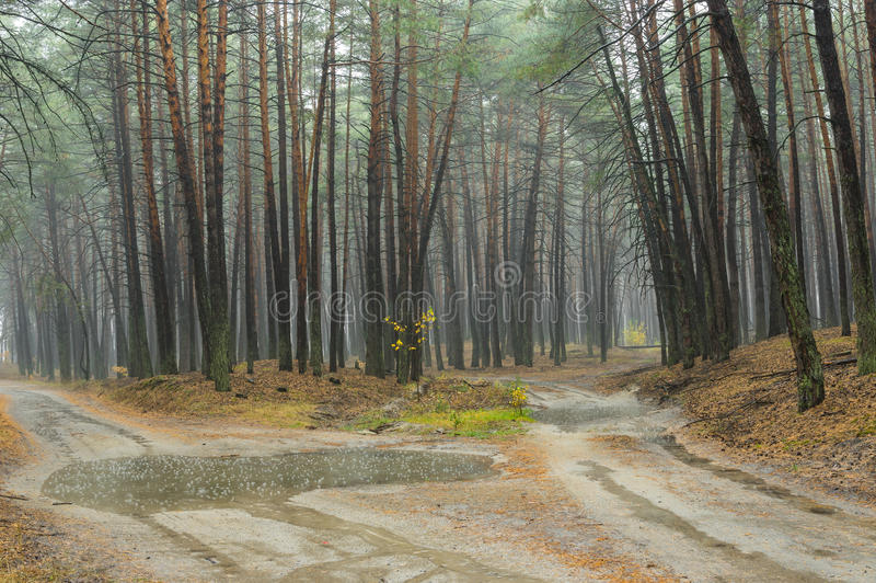 Αμμώδεις δρόμοι στο βροχερό δάσος πεύκων στην Ουκρανία στοκ εικόνες