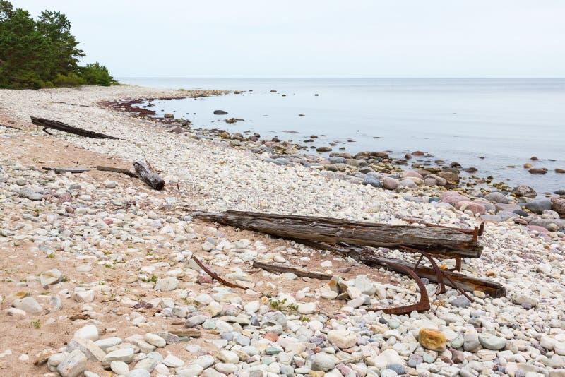 Αμμώδης παραλία με το driftwood στοκ εικόνες