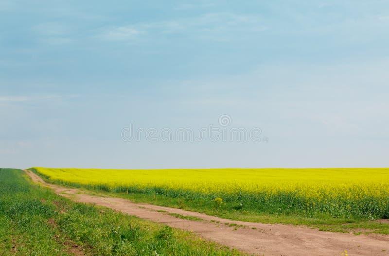 Αμμώδης δρόμος μεταξύ των τομέων του ανθίζοντας συναπόσπορου στοκ εικόνα με δικαίωμα ελεύθερης χρήσης