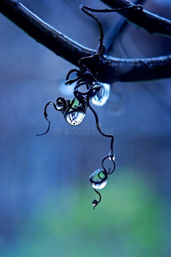 αμπελώνας βροχής στοκ εικόνες