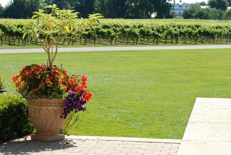 αμπελώνας κήπων ανασκόπησ&eta στοκ φωτογραφία με δικαίωμα ελεύθερης χρήσης