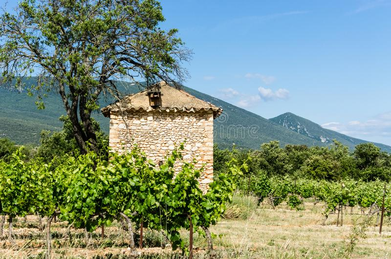Αμπελώνας με το σπίτι και το δέντρο πετρών στοκ εικόνες