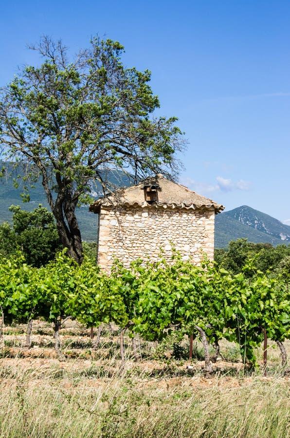 Αμπελώνας με το σπίτι και το δέντρο πετρών στοκ φωτογραφία