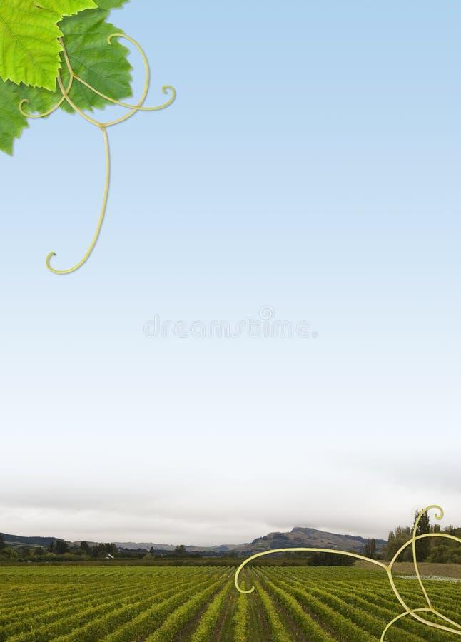 αμπελώνας πλαισίων στοκ φωτογραφίες