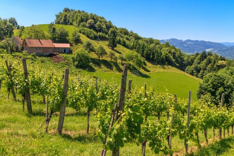 Αμπελώνας της Τοσκάνης Styrian, Styria, Αυστρία στοκ εικόνα με δικαίωμα ελεύθερης χρήσης