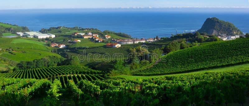 Αμπελώνες και αγροκτήματα για την παραγωγή του άσπρου κρασιού με τη θάλασσα στο υπόβαθρο στοκ εικόνα