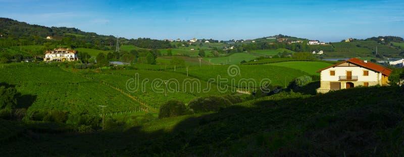 Αμπελώνες και αγροκτήματα για την παραγωγή του άσπρου κρασιού στοκ εικόνα με δικαίωμα ελεύθερης χρήσης