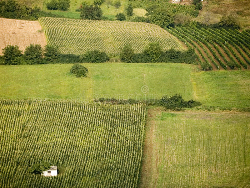 Download αμπελώνες πεδίων δημητρι&alph Στοκ Εικόνες - εικόνα από κρασί, κατανάλωση: 385208