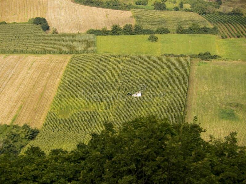 Download αμπελώνες πεδίων δημητρι&alph Στοκ Εικόνα - εικόνα από σιτάρι, αμπελουργία: 385249