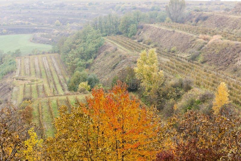 Download Αμπελώνες το φθινόπωρο στοκ εικόνες. εικόνα από αμπελουργία - 22798494