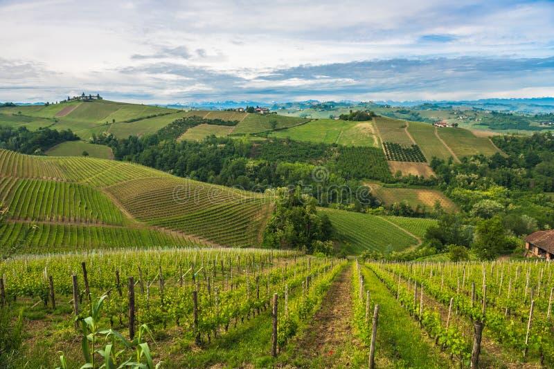 Αμπελώνες Langhe, Piedmont, παγκόσμια κληρονομιά της ΟΥΝΕΣΚΟ στοκ φωτογραφία