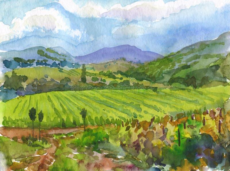 Αμπελώνες. Watercolor. διανυσματική απεικόνιση