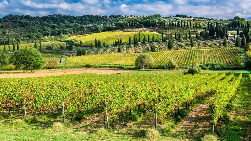 Αμπελώνας κοντά σε Montalcino στην Τοσκάνη στοκ εικόνες με δικαίωμα ελεύθερης χρήσης