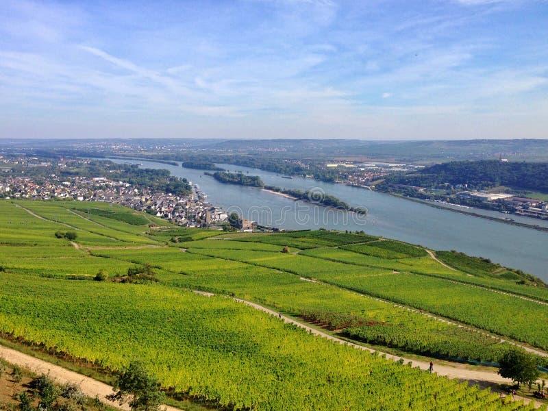 Αμπελώνας στην περιοχή Rheingau στοκ εικόνες με δικαίωμα ελεύθερης χρήσης