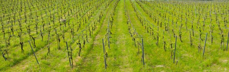 Αμπελώνες, αγρόκτημα για την παραγωγή του κρασιού στοκ φωτογραφίες με δικαίωμα ελεύθερης χρήσης
