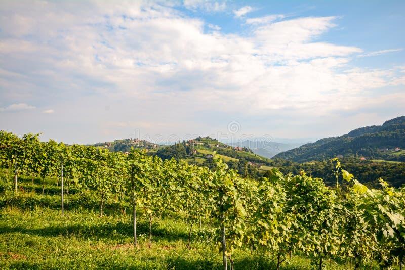 Αμπελώνες κατά μήκος του δρόμου κρασιού νότιου Styrian το φθινόπωρο, Αυστρία στοκ φωτογραφίες με δικαίωμα ελεύθερης χρήσης