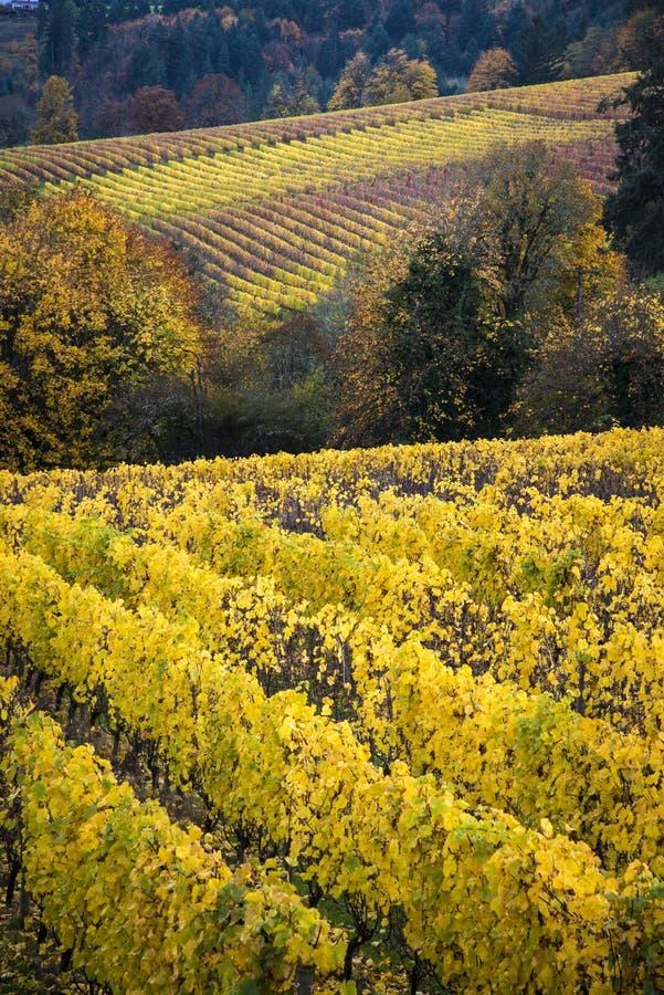 Αμπελώνες φθινοπώρου, κοιλάδα Willamette, Όρεγκον στοκ εικόνες