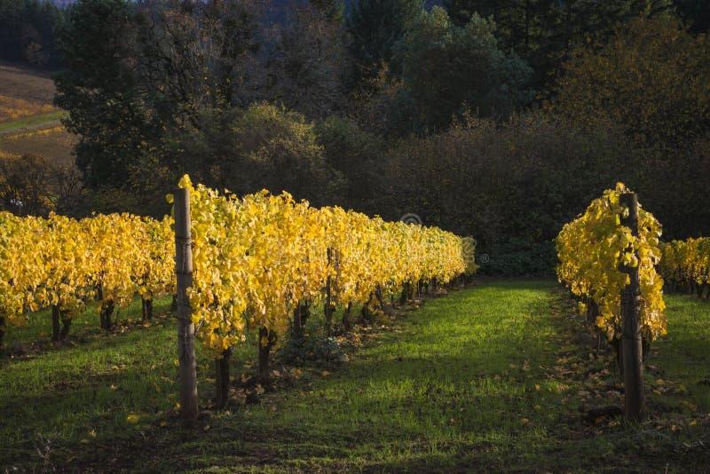 Αμπελώνες φθινοπώρου, κοιλάδα Willamette, Όρεγκον στοκ φωτογραφία με δικαίωμα ελεύθερης χρήσης