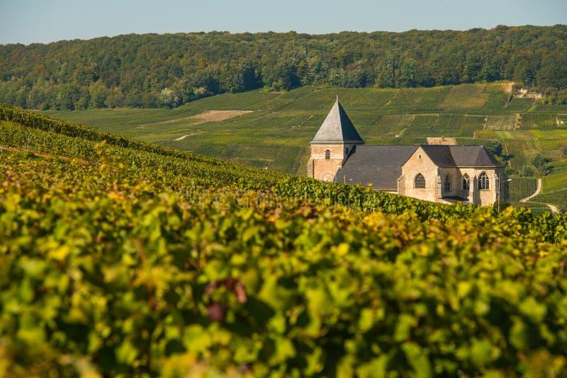 Αμπελώνες Chavot Courcourt CHAMPAGNE Marne στο τμήμα, Γαλλία στοκ εικόνες