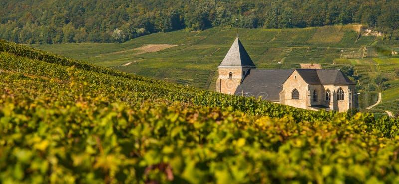 Αμπελώνες Chavot Courcourt CHAMPAGNE Marne στο τμήμα, Γαλλία στοκ φωτογραφία